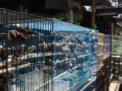 Malang animal market